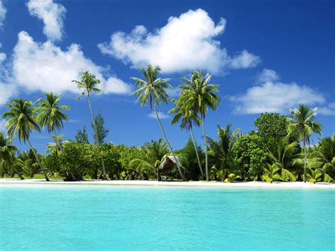 Tropical Wallpapertropical Wallpapers Tedlillyfanclub