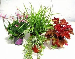 Winterharte Pflanzen Für Balkonkästen : balkonpflanzen set f r balkonk sten 40 cm lang pflanzen versand f r die besten winterharten ~ Orissabook.com Haus und Dekorationen