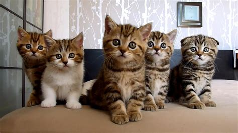 cute kittens  funny cats  topbestpicscom