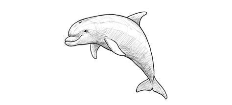 draw  dolphin step  step