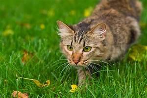 Katzenfutter - große Auswahl auf
