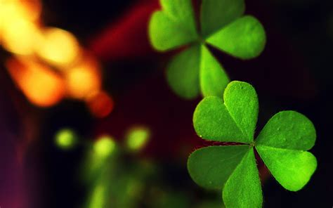 Clover Background Clover Wallpapers Pictures Images