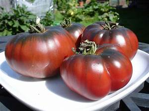 Black Krim- Heirloom Tomato Seeds-Great for Sandwiches ...