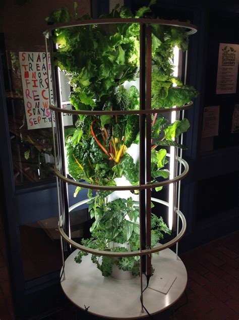 forest green s garden club serves up smoothies parkland