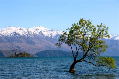 cuisine d hiver nouvelle zélande que faire et que voir sur l 39 île du sud