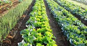 India's First Organic Farming University Is Coming Up In ...