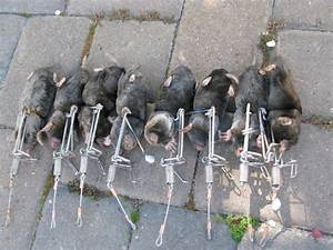 How Getting Rid of Moles in Gardens or Yards? HomesFeed