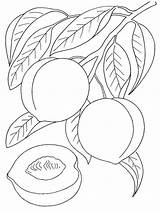 Peach Coloring Pages Fruits Printable Colors Recommended Bright sketch template