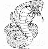 Cobra Coloring Snake King Python Drawing Striking Venomous Garter Hissing Vector Printable Drawings Rattlesnake Snakes Nice Web Geo Template Atstockillustration sketch template