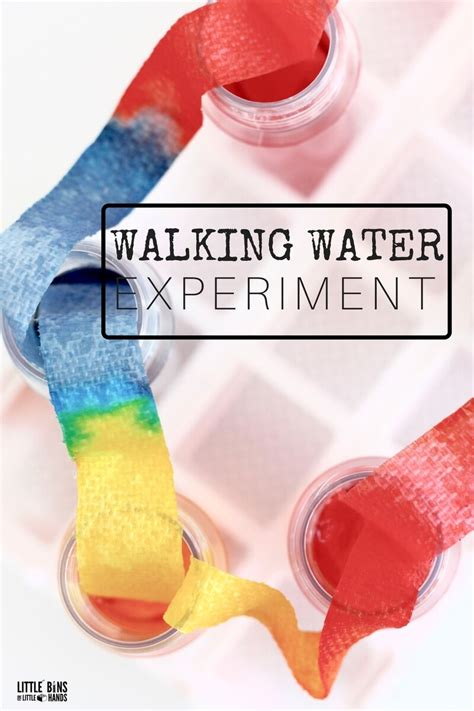 walking water science experiment for stem and rainbow 741 | Walking Water Science Experiment for Kids STEM