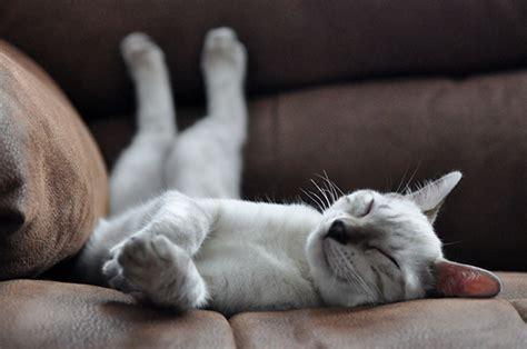 conseils pour adopter un chat de refuge