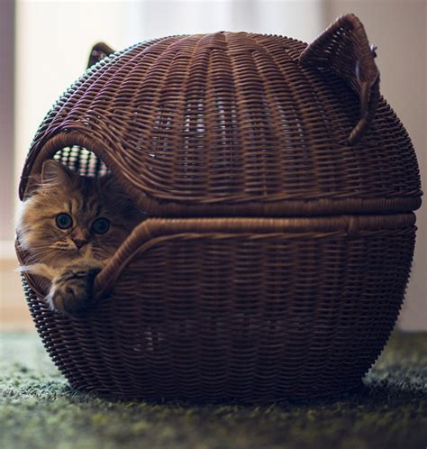 cute rattan cat beds