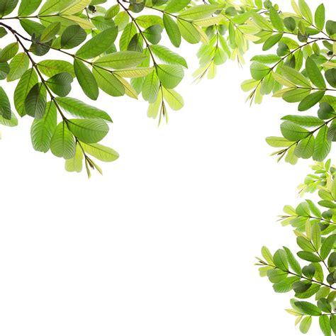framing leaves green fresh leaves frame kingsway christian fellowship