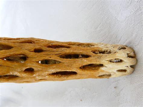 cholla cactus wood ls vintage rare cholla cactus wood walking stick cane 37