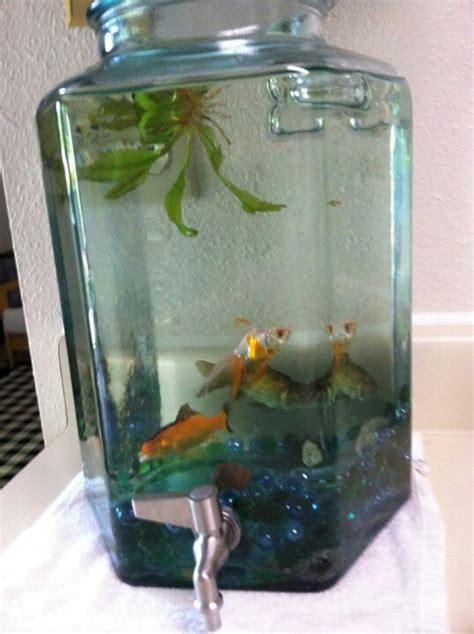 small fish for aquarium 17 best ideas about small fish tanks on outdoor fish ponds mini aquarium and