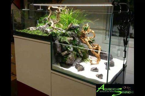 inspirasi aquarium keren  didalam ruangan ferboescom