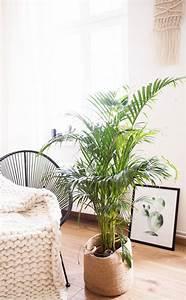 Zimmerpflanzen Für Schlafzimmer : 5 pflegeleichte zimmerpflanzen f r euer zuhause ~ A.2002-acura-tl-radio.info Haus und Dekorationen