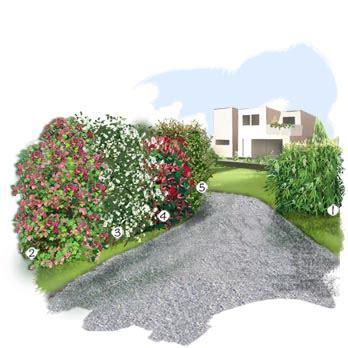 haies libres jardin ext 233 rieur jardineries truffaut