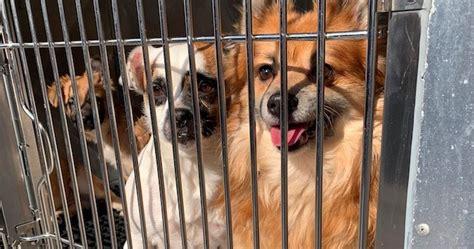 pennsylvania spca rescues    animals