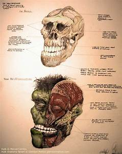 The Anatomy Of The Incredible Hulk  U2014 Geektyrant