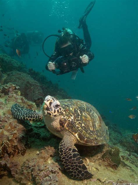 Videography Courses  Koh Tao Scuba Diving  Roctopus Dive