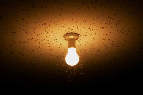 why are bugs attracted to light avibo why bugs are attracted to lights