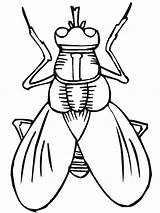 Coloring Insect Pages Fly sketch template