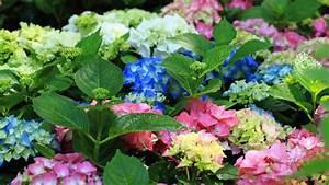 Pflanzen Für Schattigen Balkon : mit diesen pflanzen wird ihr balkon zum bl tenparadies ~ Watch28wear.com Haus und Dekorationen