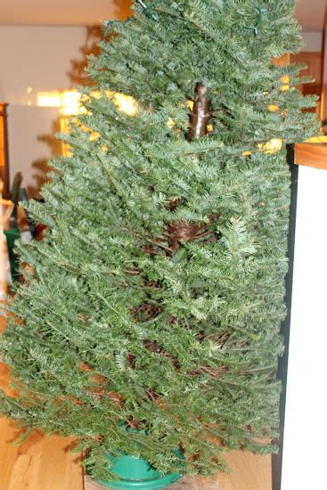 the tale of the crooked christmas tree katie did what