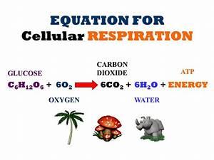 CHEMICAL EQUATION FOR CELLULAR RESPIRATION ...