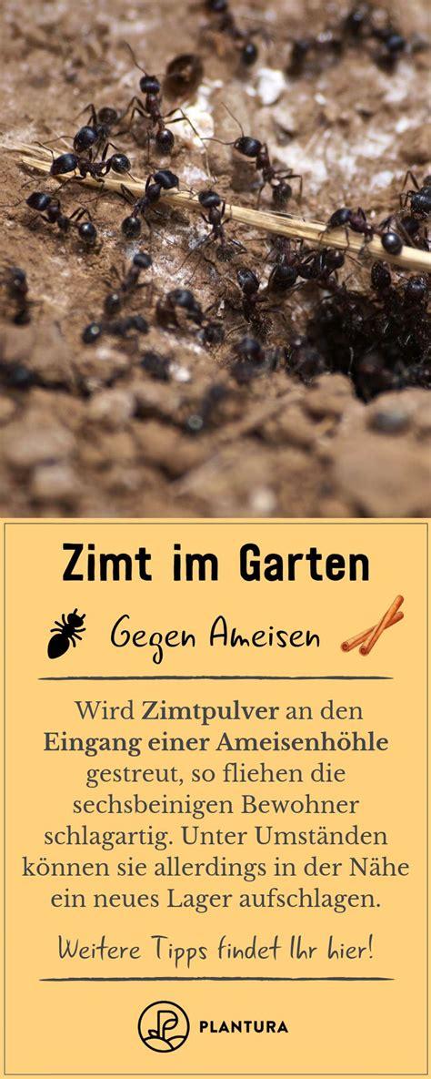 zimt im garten zimt als pflanzenschutz und gegen ameisen tipps tricks ameisen im garten