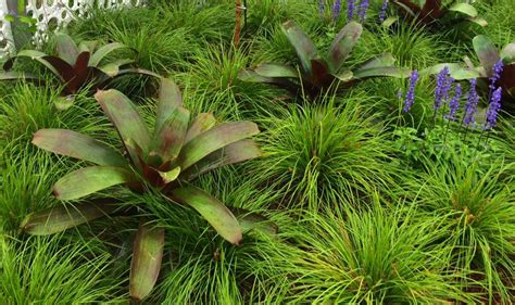 great garden plants great plant combinations miss smarty plants