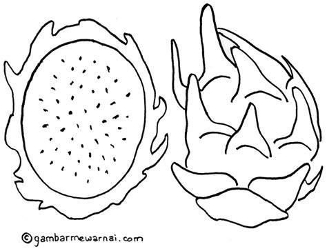 contoh gambar buah naga untuk diwarnai buku mewarnai