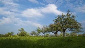 Free Images : landscape, tree, nature, forest, horizon ...