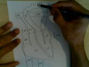 Cardiophysiology 1  Blood Flow Through The Heart