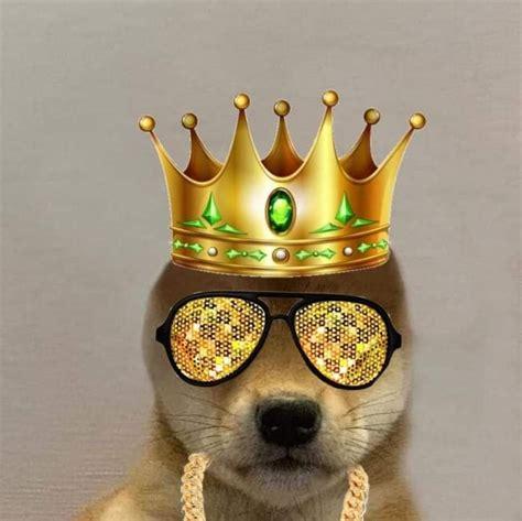 Pin De Stilly En Dog With Hat Fotos De Perfil Whatsapp