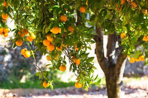 Urban Harvest Hosts Its 16th Annual Fruit Tree Sale
