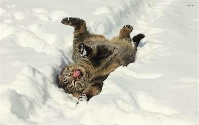 Funny Animal Winter Snow Cat Wallpapers Wallpapersafari