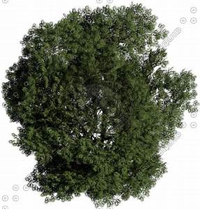 Tree Top View Photoshop - Bing images