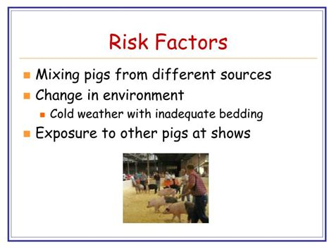 factors risk pig issues common health ppt powerpoint presentation