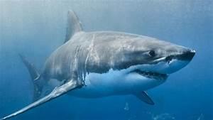 Shark Sightings Close Popular Melbourne Beaches