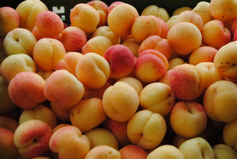 Apricot crop badly hit by the weather
