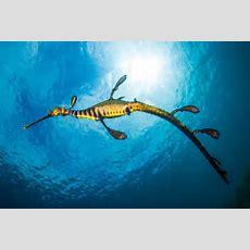 Uli Kunz Fantastische Farben Unter Wasser › Netzwerk