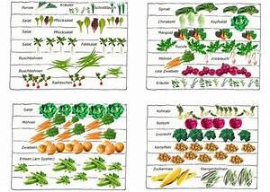 Gemüsegarten Anlegen Beispiele : wie man einen gem segarten plant und anlegt ein beispiel mit vier beeten die in mischkultur ~ Watch28wear.com Haus und Dekorationen