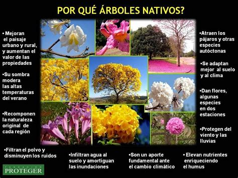 vivero ecologico la sombra vende arboles y plantas autoctonas