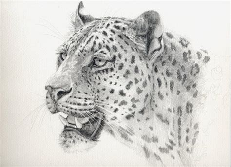 leopard  sschukina realistic animal drawings animal