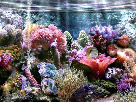 fonds d 233 crans bel aquarium centerblog