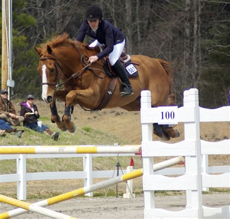 saddle she rode rojo warmblood karma bred traded instant jumps moments jennifer again could friends