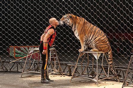 Biglietto Ingresso Circo Rinaldo Orfei Addio Al Circo In Citt 224 La Provincia