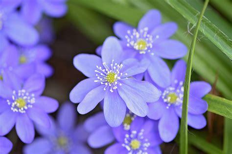 images gratuites la nature petale botanique bleu